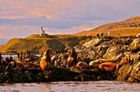 Whale Rocks - Jim Maya photo