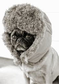 dog-bundled-up