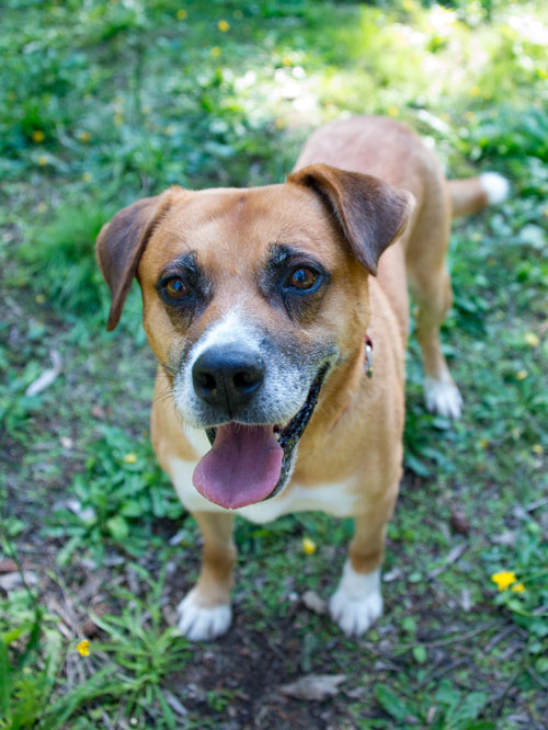 Eli is this week's Pet of the Week - Contributed photo