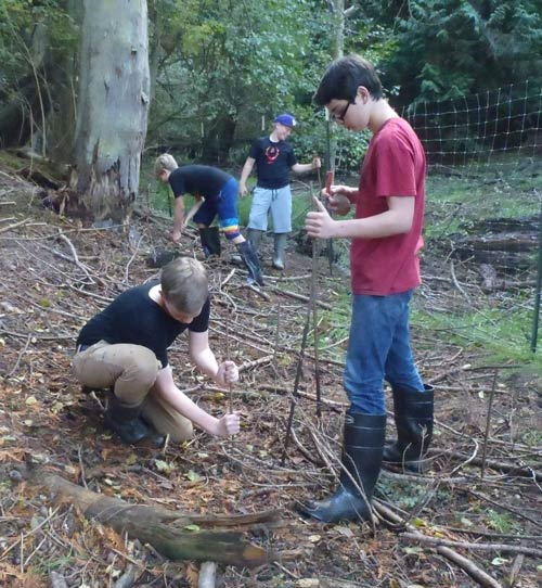 Orcas Middle School kids plant trees - Contributed photo