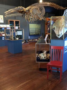 red-chair-and-whale-museum