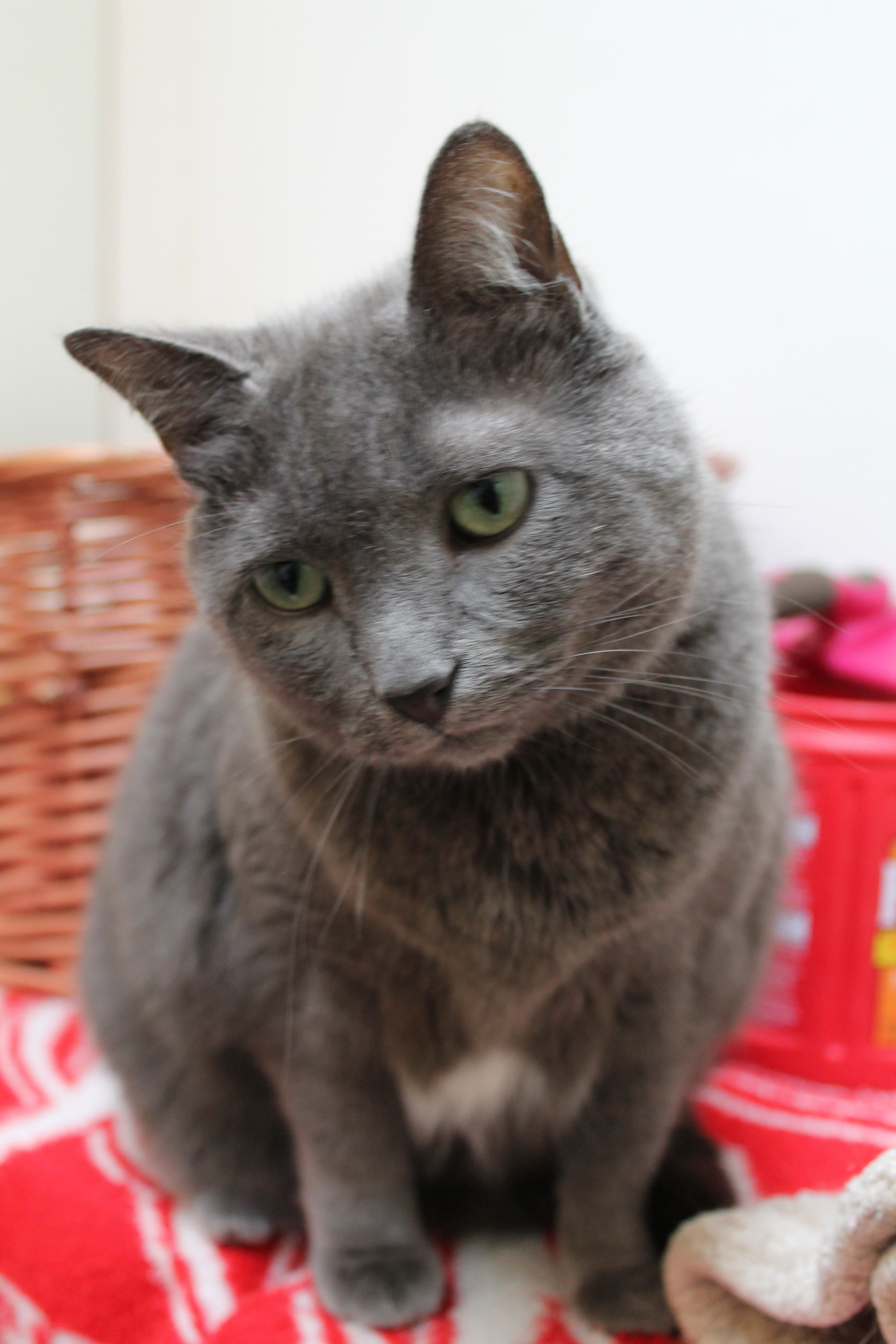 Pet of the Week: Smokie - Contributed photo