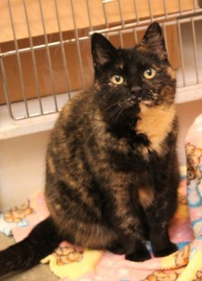 Hazel is this week's Pet of the Week - Contributed photo