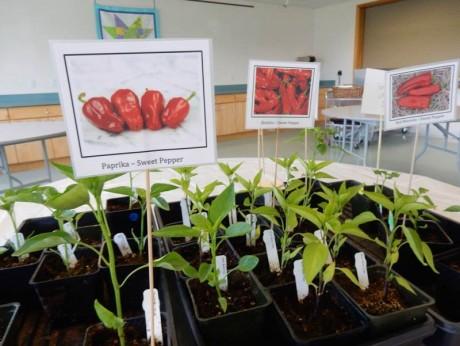 plant-sale-plants