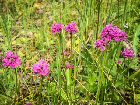 Wildflowers - SJ Update photo