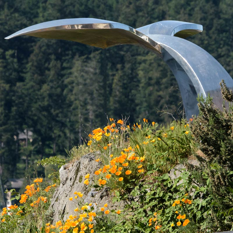 Poppies Under Whale Tail - Aaron Shepard photo