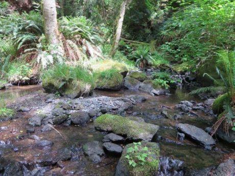 Coho Preserve Cascade Creek - Kurt Thorson Photo