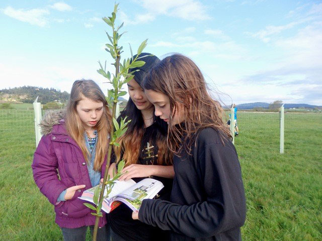 SSIS science students planting trees and shrubs earlier this spring - Contributed photo