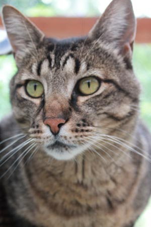 Moose is this week's Pet of the Week - Contributed photo