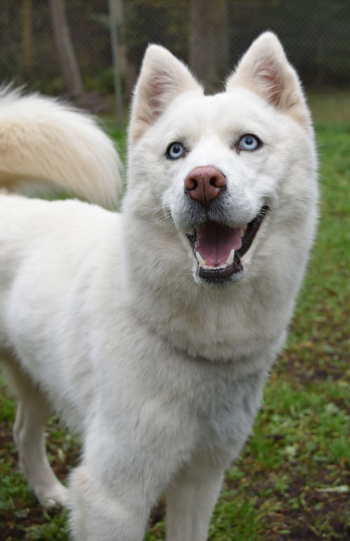 Roxy is this week's Pet of the Week - Contributed photo