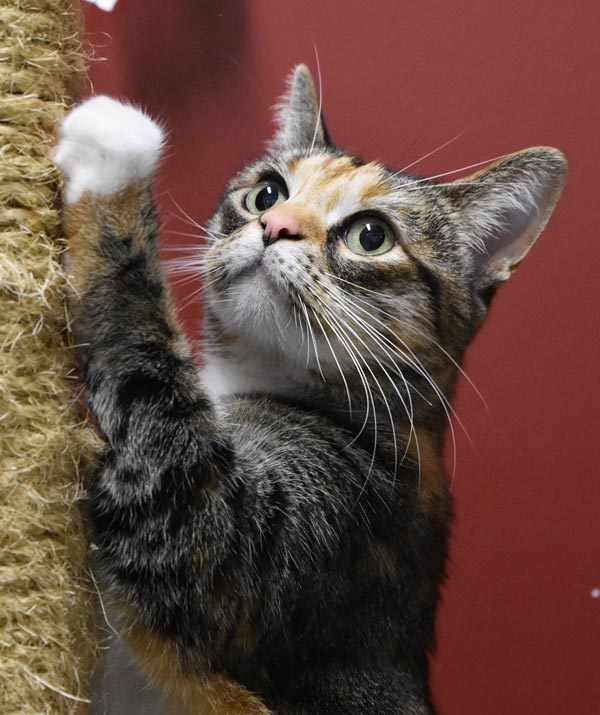 Autumn is this week's Pet of the Week - Contributed photo
